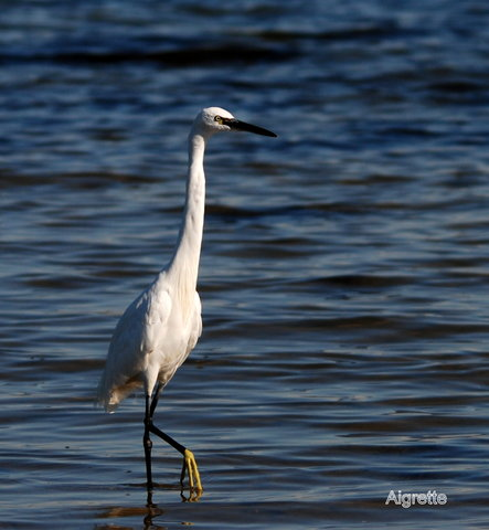 Faune oiseaux-Aigrette-Armand BARDIVIA © Association Arc Image